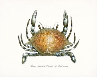 Antique French Crab Natural History Art Print