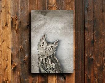 Owl - Owl photography - Owl art - Owl canvas - Owl decor - Animal photography - Bird photography -