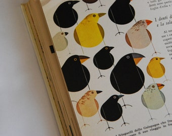 1961 Charles Harper - The Giant Golden Book of BIOLOGY, An Introduction to the Science of Life.