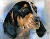 "Bluetick Coonhound, Coon, Blue, AKC Hound, Pet Portrait Dog Art Watercolor Painting Art Print, Wall Art, Home Decor ""Blue Boy"" Judith Stein"