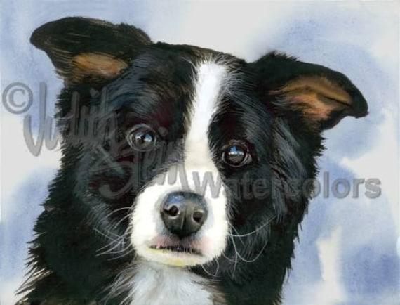 "Border Collie, Black & White, AKC Herding, Pet Portrait Dog Art Watercolor Painting Print, Wall Art, Home Decor ""Hardy Herder"" Judith Stein"