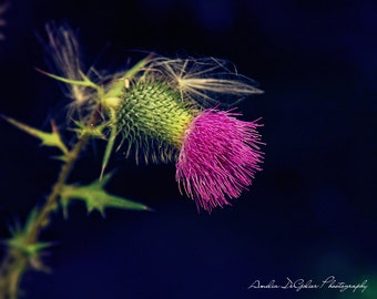 Magenta Beauty - Michigan Fine Art Photography - Kalamazoo Fine Art Photography