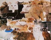 Lot of 40 Cat Book Clippings Images Illustrations Encyclopedia for Scrapbooking Collage Altered Art (Lot 1)