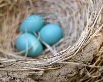 Blue Eggs in Robin's Nest Photo, Fine Art Photography, Nature Photography, Spring Decor, Easter Decor, Easter Gift