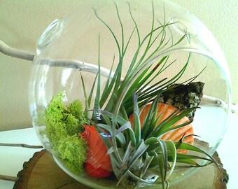 Air plant terrarium - Hanging glass orb - Air plants - Seashell - Moss - Orange terrarium - Beach terrarium - Home and garden