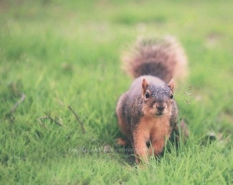 Squirrel Fine Art Photography Fur Animal Wildlife Woodland Brown Green Nursery Home Decor Wall Art