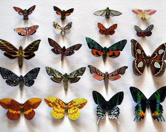 Moth Magnets Set of 19 Insects Refrigerator Magnets Kitchen Decor Multi Color Home Decor Educational Bedroom Decor Gifts 2-6 inches