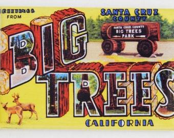 Greetings from Big Trees California Fridge Magnet
