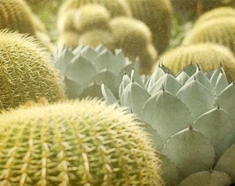 Cactus Photography, Southwest Photograph, Southwestern Picture, Succulent Wall Decor, Plant Photo, Desert Photo