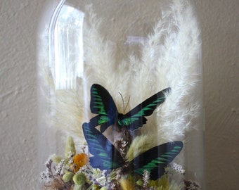 Rare Birdwing Butterfly Specimen in Extra Large Bell Jar