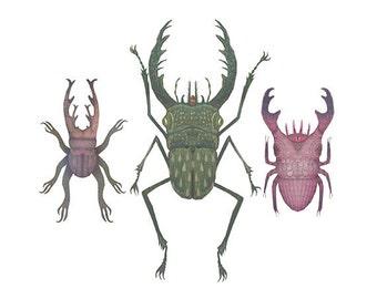 Stag beetles - A4 art print