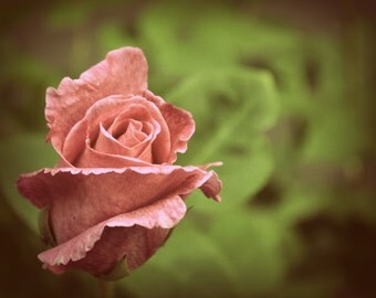Single Pink Rose Digital Photograph - Instant Download
