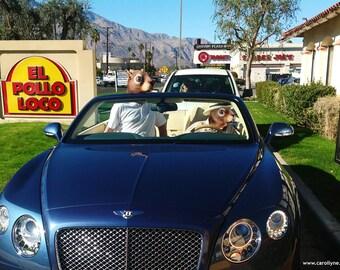Fine Art Print: Breaking Bad Squirrels. Bentley Palm Springs Pop Surrealism Animal Art