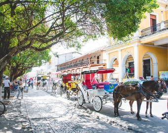 Street Photography - Nicaragua, Street Life Photo. Central America. Granada. Horse and Cart. Fine Art Photograph