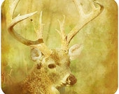 Whitetail Deer Painted Mouse Pad