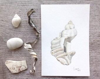 Seashell skeleton, original watercolor illustration 4x6 - White, beige and grey shell - Neutral home decor, beach cottage, coastal wall art