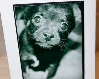 photo card, black and white, puppy photograph