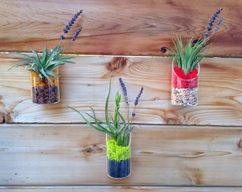 Modern Air Plant and Moss Wall Art or Table Decor