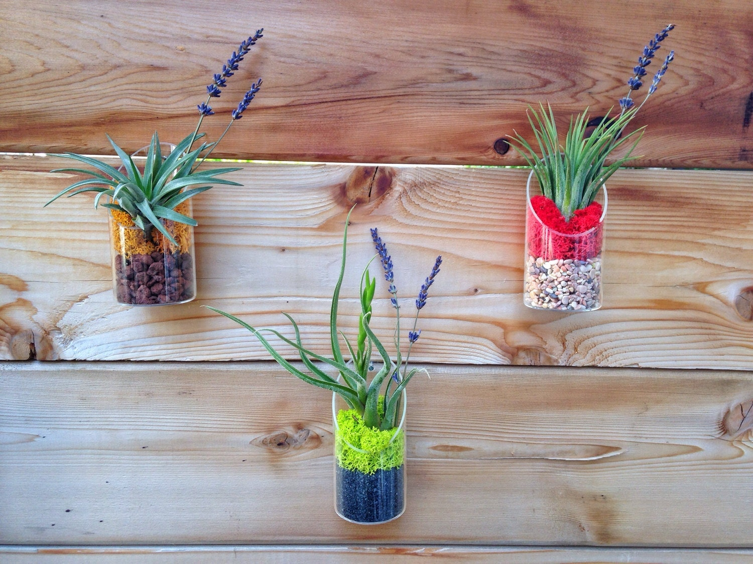 Modern air plant and moss wall art or table decor for Air plant wall art