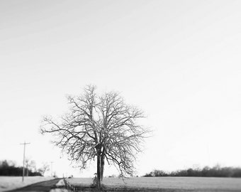 Winter tree photograph, tree photo, on the road, road trip, black and white tree, nature photography