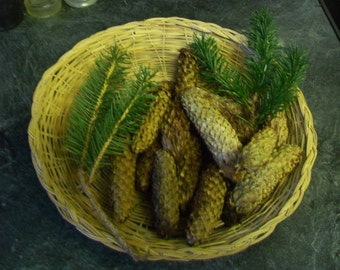 20 Spruce cones from North Devon, UK