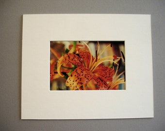 8 x 10  off- white art picture photo mat