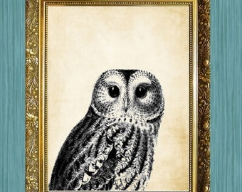 Owl Art Owl Print Black Owl Art Wall Art 8 x 10