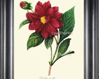 BOTANICAL PRINT Redoute Flower  Botanical Art Print 32 Beautiful Red Dahlia Plant Garden Nature to Frame Home Decor