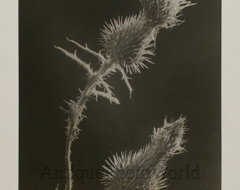 Prickle flower close up vintage art photo