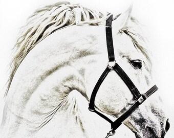Digital Sketch - Custom horse Portrait - Sketch of horse - Custom horse Art - Unique custom artwork