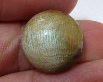 RARE! 14mm Untreated GOLDEN CORAL Pacific ~ Green Sheen