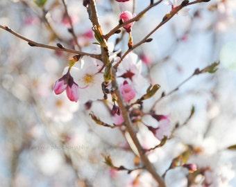 pink cherry blossoms, flower photography, floral wall art, feminine, nursery art, nature photography, cherry tree