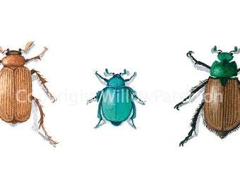 Three Beetles - Giclee Print