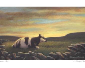 Burren Cow