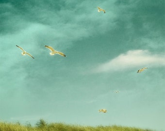 Nature photography, Birds, Seagulls, Beach, Summer, Birds, Flying, Sky, Teal, Wall Decor