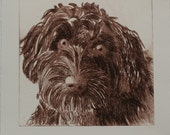 Cockerpoo Dog - an original drypoint etching