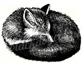Sleeping Fox Print from an Original Drawing in Black Ink on Recycled Paper