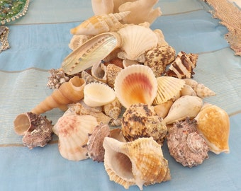 Bag of Mixed Shells - Some up to 3""
