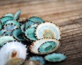 50 pc Beach Decor - Green Limpet Shells - Bulk Shells - Wholesale Shells - Craft Shells