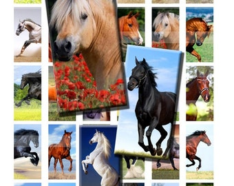 Horse Colt Pony Digital Images Collage Sheet 1x2 inch Rectangles Domino Commercial INSTANT Download RD30