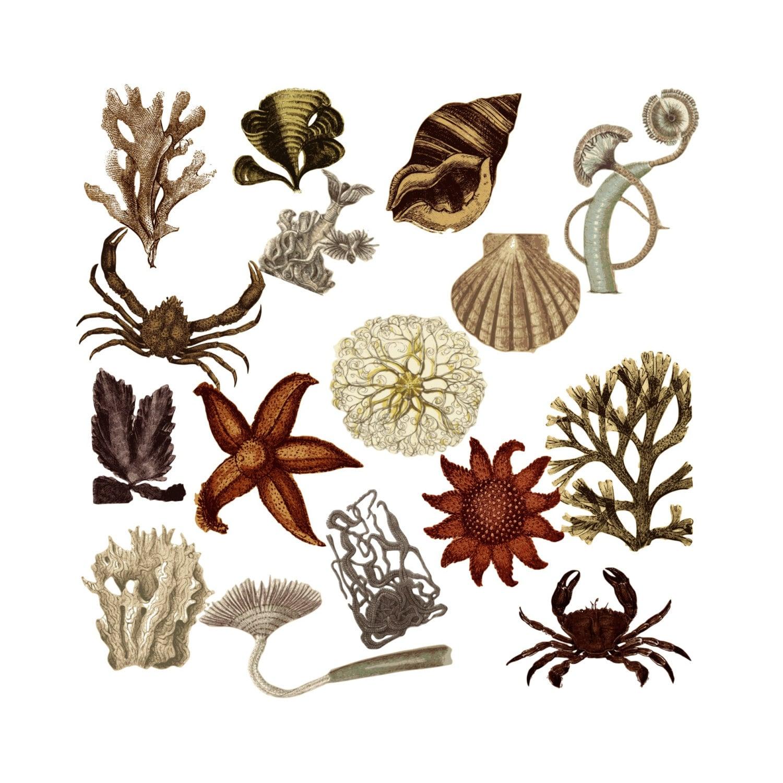 Nautical Clipart Clip art Vintage Ocean Graphics Natural