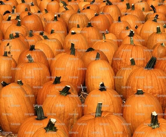 Edible Cake Images Thanksgiving : Pumpkins Thanksgiving Halloween Edible Cake and Cupcake
