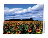 Blank Note Cards Set of 5, Sunflowers in The Field, Photo Gifts, 4 1/4 x 5 1/2 inch note cards, Landscape Note Cards, Fine Art Photography
