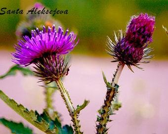 Wild Beauty - Fine Art Photography - Digital photography download, instant download, flower photography, floral decor, purple flower photo