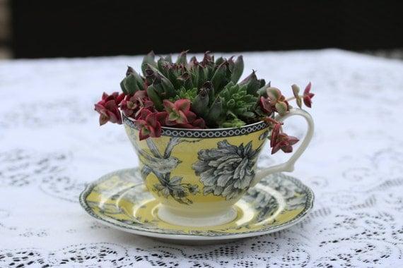 Tea Cup Dish Garden Succulent Plant Arrangement Gift Ideas
