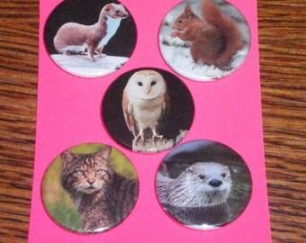 British Wildlife Badge set 2