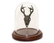Animal Skull Display Deer Skull in Bell Jar Glass Dome