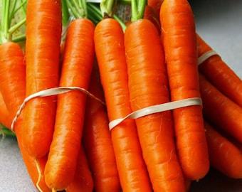 Organic Carrot Red Danvers / Rare / Daucus carota / Carrot seeds / Highly Nutritious / Heirloom / Outdoor Garden
