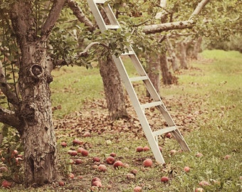 Apple Orchard photograph,  Fall wall decor