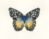Butterfly #14 (Print)